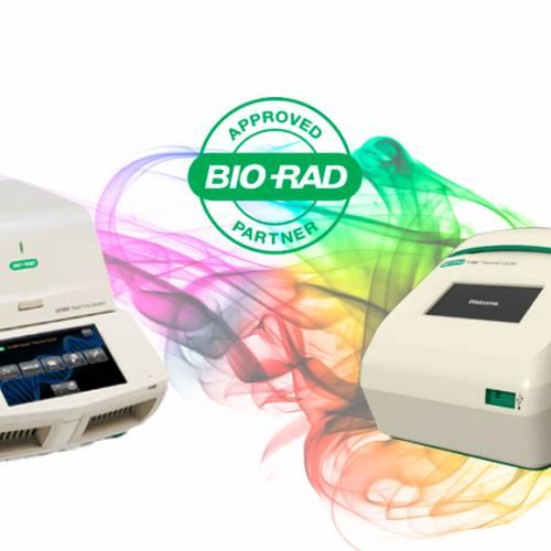 Amplificação por PCR